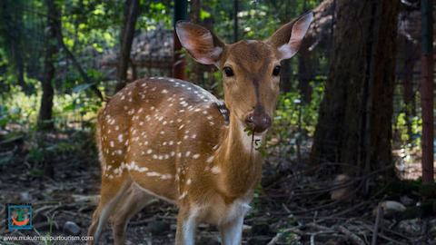Mukutmanipur Sightseeing Places